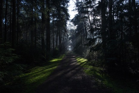 A cold january day in the forest