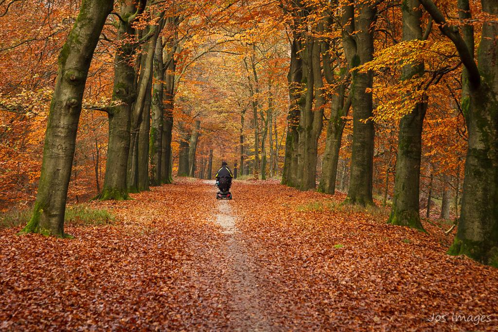 Genieten - Herfst in het bos. Wat kunnen mensen daarvan genieten! Groet, Jos - foto door Digipics op 18-11-2019 - deze foto bevat: herfst, bos, eenzaam, genieten, scootmobiel