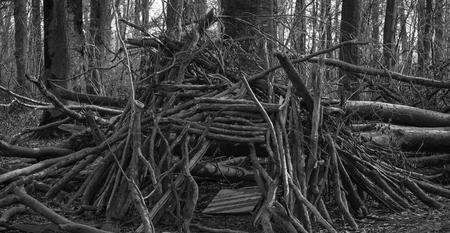 New Cabin in the Wood - Blairwitch Project vs Cabin in the wood - foto door HJS1964 op 02-03-2021 - deze foto bevat: boom, natuur, bos