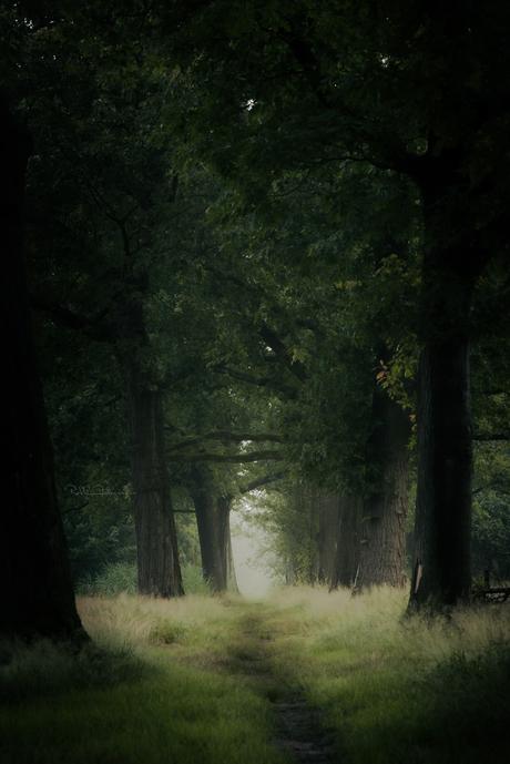 Blissfull path