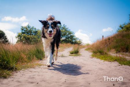 Smile - Op de internationale dag van de lach mag een blije foto natuurlijk niet ontbreken! - foto door p.bezuijen op 07-10-2016 - deze foto bevat: huisdier, hond, lachen, lach, wandelen, vrolijk, lopen, blij, Border Collie, world smile day, internationale dag van de lach