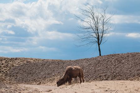 Wildlife Emmen - 02 - Deze foto heb ik deze vakantie gemaakt in het nieuwe Wildlands in Emmen.  Hier zijn de andere foto's te zien in de originele resolutie: http://imgu - foto door Boost9898 op 30-04-2016 - deze foto bevat: zon, dierentuin, natuur, zomer, giraffe, wildlife, marmot, emmen, kameel