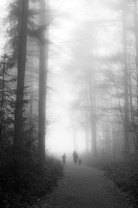 Misty Morning III