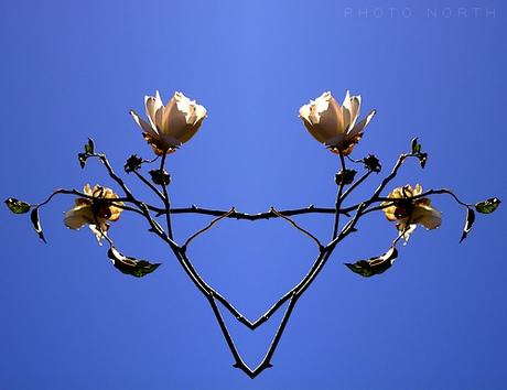 Rose and Rose