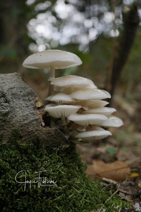 Bosje paddenstoelen
