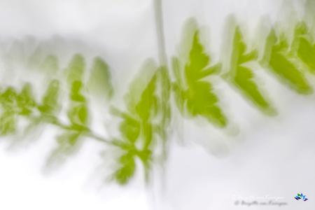 Forest movements II - Allemaal bedankt voor de reacties op mij varen & groen serie variant 1. De eerste zat nog wat scherpte in. Deze variant is wat creatiever opgebouwd - foto door Puck101259 op 11-07-2016 - deze foto bevat: groen, macro, natuur, geel, licht, zomer, beweging, onscherp, varen, dof, brigitte, high key