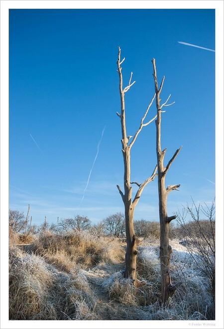 Twins - een winterse tweeling :-) - foto door Femke Woltring op 15-03-2013 - deze foto bevat: sneeuw, winter, duinen, bomen, kou, vliegtuigstrepen
