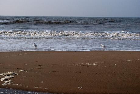 Strand met meeuwen