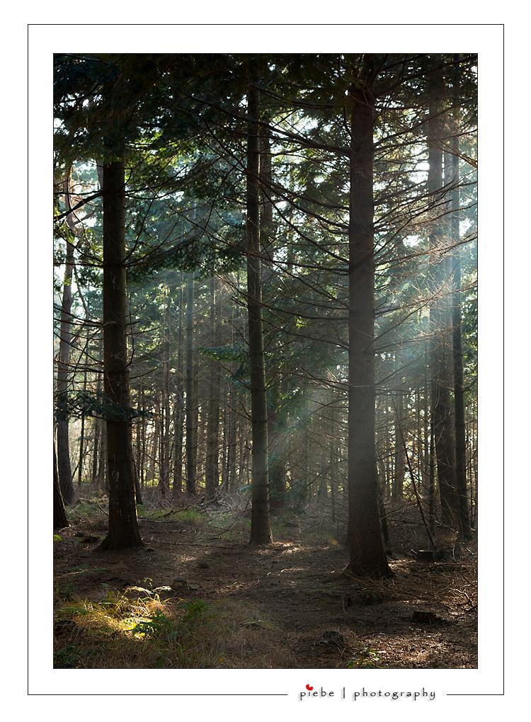En toen was er licht... - In de bossen van Oranjewoud viel het licht prachtig en geconcentreerd binnen...  Groet Piebe - foto door Piebe op 21-11-2011 - deze foto bevat: zon, hek, licht, schaduw, bomen, friesland, zonnestraal, bossen, laan, lichtstraal, oranjewoud, novemberlicht