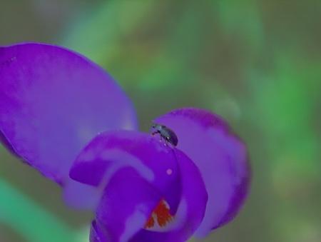 P2255043.jpg tor op krokus - De beklimming . - foto door jeanetfoto op 27-02-2021