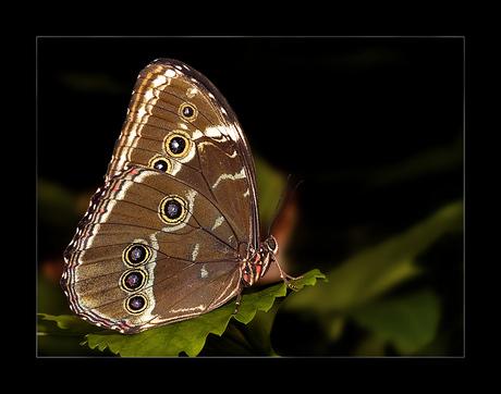Vlindertuin No 2