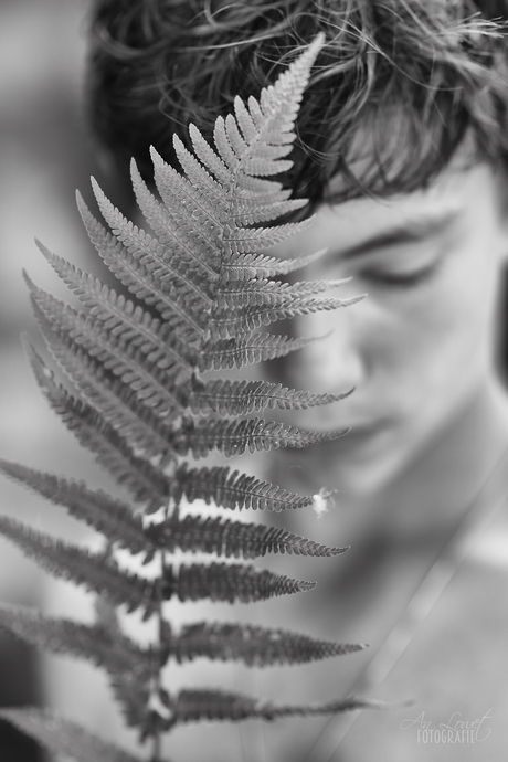 The one with the fern