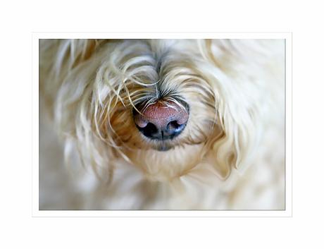 doggies nose ..