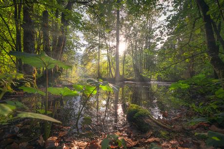 The swamp - Austria