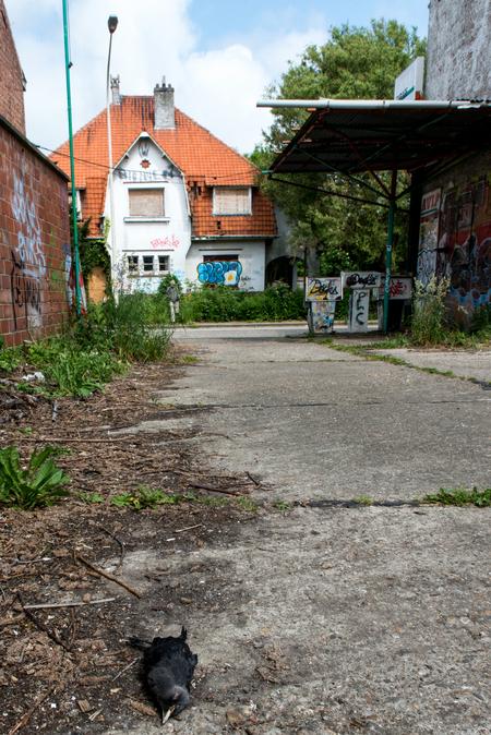 Een uitgestorven dorp - Doel, een uitgestorven dorp - foto door RonZuidgeest op 16-06-2013 - deze foto bevat: grafiti, urbex, doel, finished, kaput