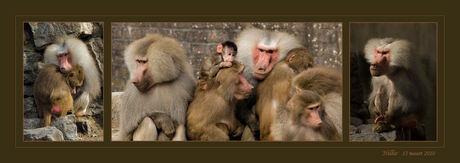 mantel bavianen
