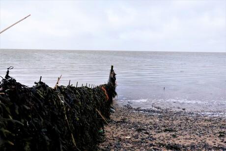 Hek van zeewier