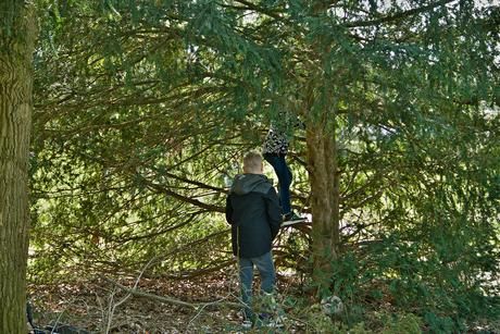 Zo'n boom roept kinderen om te klauteren.