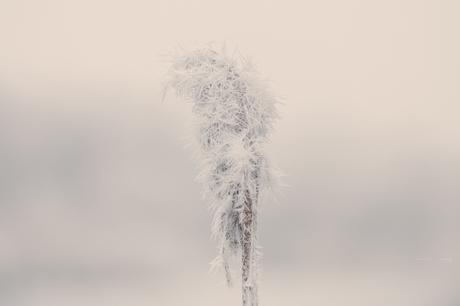 Een koude wereld