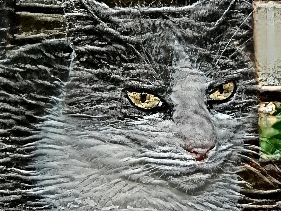 poes Duimpje - Dit is een foto van de poes vd buren waar ik weleens op heb gepast. Een dame met een pittig karakter maar ook zoooo lief. ;)   Camera: Sony DSC350 e - foto door FractalCaleidoscope op 25-11-2020 - deze foto bevat: poes, bewerkt, creatief, filter, wallpaper, stock