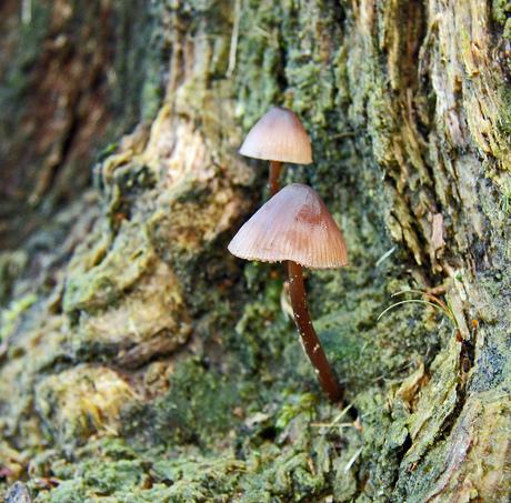 Op een boomstronk