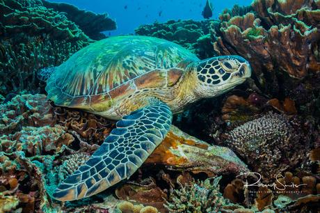 Een chillende schildpad!