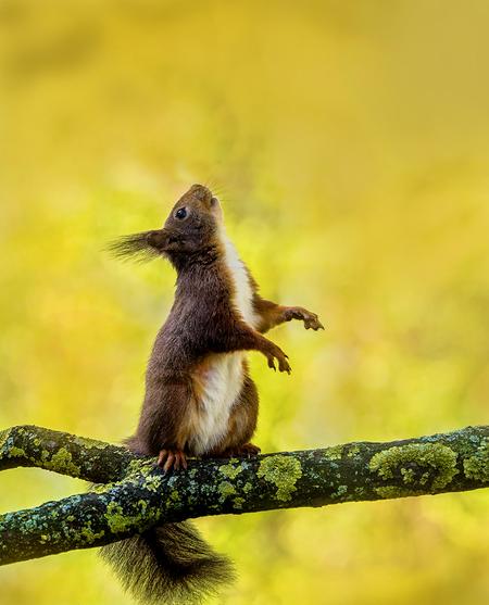 Eekhoorn - - - foto door geld1846 op 30-03-2021