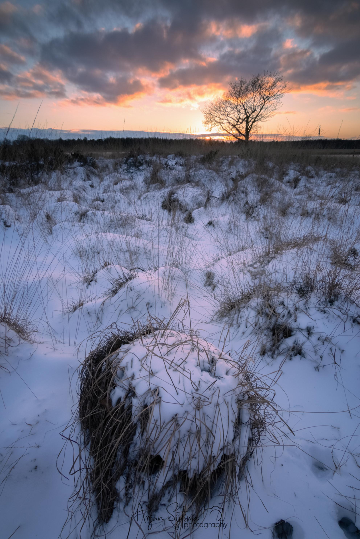 Winterse heide - - - foto door ArjanSijtsma op 20-02-2021 - deze foto bevat: lucht, wolken, zon, natuur, licht, sneeuw, winter, avond, zonsondergang, ijs, spiegeling, landschap, heide, duinen, tegenlicht, bomen, meer, koud, lange sluitertijd, Sneeuwduinen, duurswouderheide - Deze foto mag gebruikt worden in een Zoom.nl publicatie