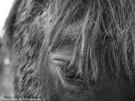 Starend paard