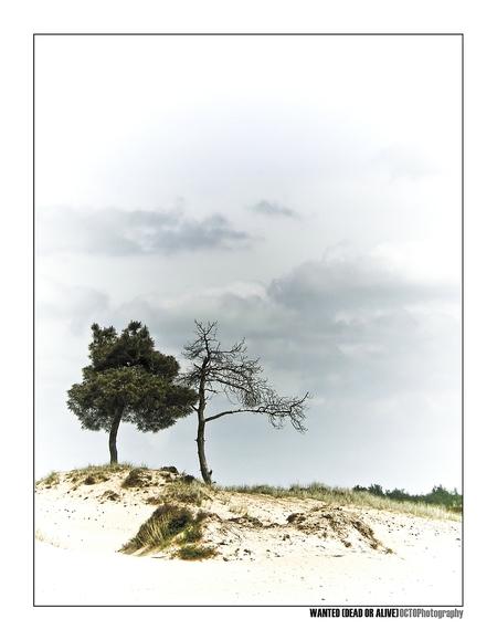 Wanted (dead or alive) - - - foto door Octo op 21-08-2008 - deze foto bevat: landschap, bomen, zandverstuiving