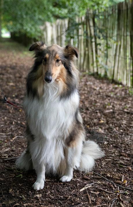 foto bokrijk Honden FB002