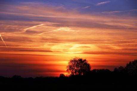 Gedraaide zonsondergang achter de bomen.