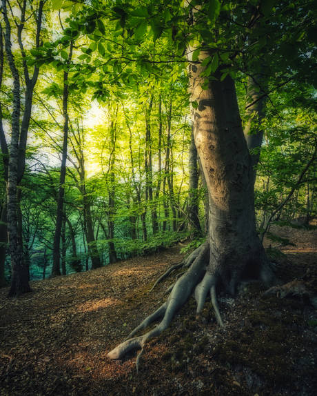 Soms is het net een sprookje 's avonds in het bos...