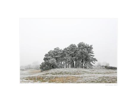 A Hazy Winter Wonderland - I