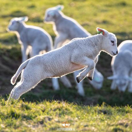 Spring in het veld!