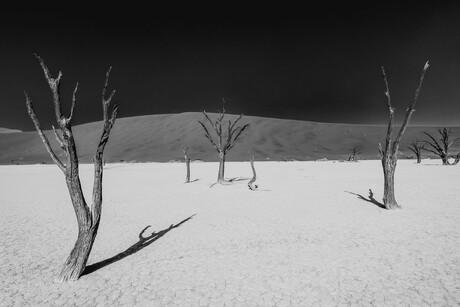 Deadvlei bomen