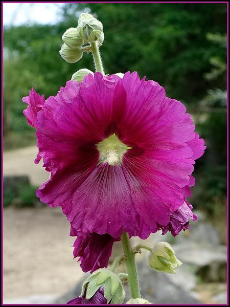 bloem - Nu één zonder. gr. Nel - foto door Nel Hoetmer op 15-07-2014 - deze foto bevat: macro, bloem, artis, nel
