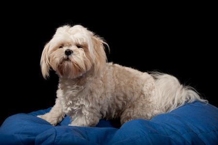 supermodel - oefening met twee reportageflitsers en een geduldig model - foto door wuppie op 14-01-2011 - deze foto bevat: hond