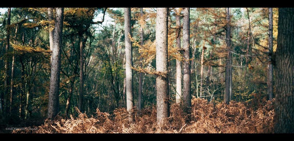 Herfstbos - Herfstkleuren in het bos.    ©MotionMan 2020 - foto door motionman op 17-11-2020 - deze foto bevat: zon, boom, uitzicht, bladeren, natuur, bruin, ochtend, herfst, morgen, ochtendzon, landschap, bos, gouden, bomen, takken, goud, perspectief, tak, zonlicht, compositie, sfeer, fel, zij, herfstkleuren, varen, scherptediepte, sony, varens, herfstbos, vroeg, zijde, felle, zijkant, sfeervol, morgenzon, herfstgezicht, bokeh, herfstlandschap, bosgezicht, oranjewoud, zeiss, herfstbomen, planar