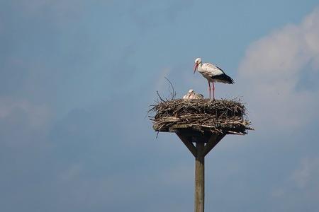Verantwoordelijkheid - Paren doe je samen, broeden ook :)  Bedankt voor het bekijken en de reacties op mijn vorige uploads!  Groeten, Jeroen - foto door JerPet op 28-03-2021 - deze foto bevat: lucht, wolken, natuur, ooievaar, voorjaar, nederland