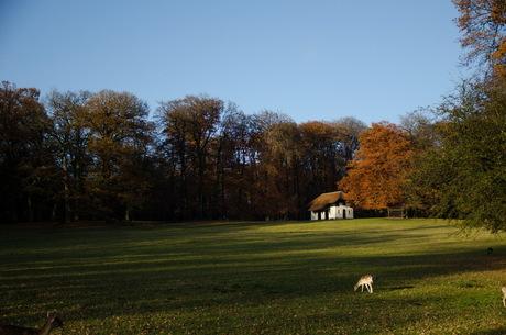 Hertenveld Park Sonsbeek Arnhem