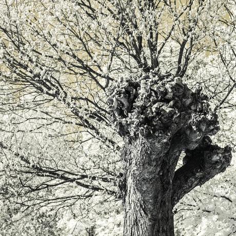 Bomen 1.jpg
