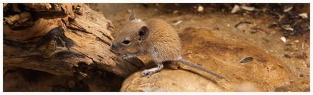 Onwetend.... - Wat er boven zijn hoofd hangt.... - foto door Mauriliers op 30-07-2013 - deze foto bevat: muis, zoo