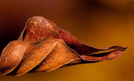 herfsttblad