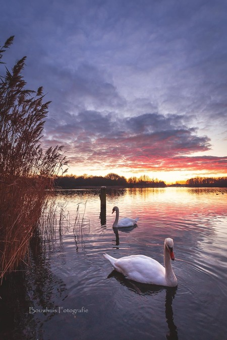 Het Zwanenmeer - 2 Nieuwsgierige zwanen kwamen even bij mij kijken of ik een broodje bij me had. Helaas, alleen een fotocamera haha :) - foto door Awake78_zoom op 20-01-2019 - deze foto bevat: wolken, zon, water, sunset, natuur, licht, winter, zonsondergang, vogel, landschap, tegenlicht, zwanen, nederland, flevoland, almere, zwanenmeer, flevopolder, weerwater, zoomnl, filmwijk