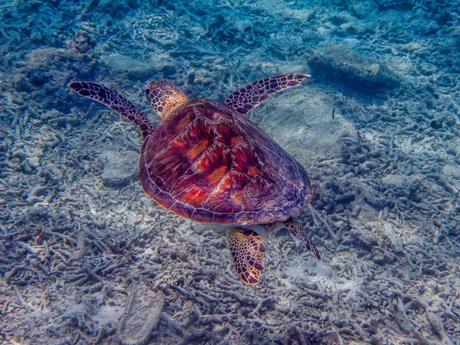 Snorkeling at Gili Meno (Indonesia)