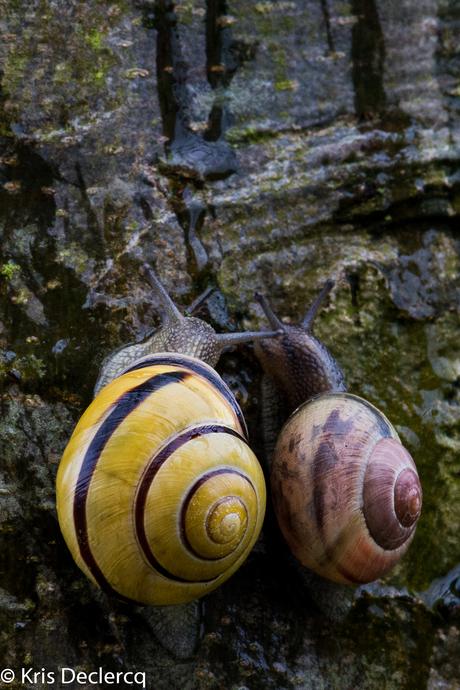 Slakken op een boomtak