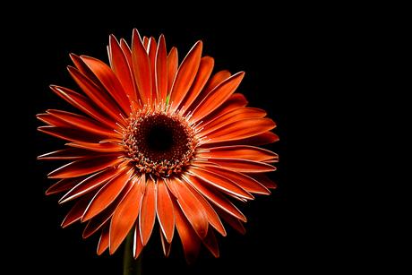 Een bloemetje