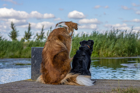 Op de steijger - Twee honden kijkend over het water. ze zagen een dode vis dobberen. - foto door yvonnevl_zoom op 13-04-2021 - locatie: 2651 Berkel en Rodenrijs, Nederland - deze foto bevat: water, wolk, lucht, hond, hondenras, fabriek, carnivoor, meer, metgezel hond, fawn