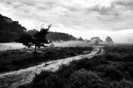 Nationaal park de Loonse en Drunense duinen - Op een licht nevelige vroege ochtend in Nationaal park de Loonse en Drunense duinen. - foto door elshout1958 op 28-02-2021 - deze foto bevat: natuur, herfst, landschap, mist, heide, duinen, bos, zonsopkomst, bomen, zand